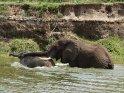 Elefanten im Wasser