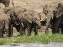 Junge Elefanten und Elefantenbabys