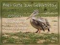 Alles Gute zum Geburtstag!  Hoffentlich hast du einen großartigen Tag und ein ebensolches neues Lebensjahr!    Dieses Motiv findet sich seit dem 29. September 2017 in der Kategorie Geburtstagskarten für Vogelfreunde.
