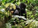 Gorillamutter mit ihrem Baby