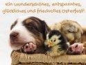 Ein wunderschönes, entspanntes, glückliches und friedvolles Osterfest!    Aus der Kategorie Tierische Osterkarten