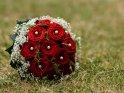Dieses Motiv findet sich seit dem 30. August 2015 in der Kategorie Hochzeitsfotos.
