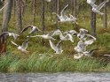 Möwen fliegen am Ufer