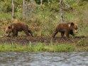 Dieses Motiv ist am 11.04.2018 neu in die Kategorie Fotos von Braunbären in Finnland aufgenommen worden.