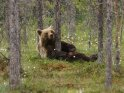 Dieses Kartenmotiv ist seit dem 29. Februar 2016 in der Kategorie Fotos von Braunbären in Finnland.
