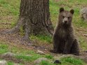 Dieses Motiv ist am 20.07.2018 neu in die Kategorie Fotos von Braunbären in Finnland aufgenommen worden.