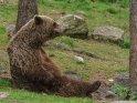 Dieses Kartenmotiv wurde am 29. Mai 2016 neu in die Kategorie Fotos von Braunbären in Finnland aufgenommen.