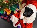 Labrador im Weihnachtskostüm unterm Weihnachtsbaum