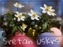 ostern_unterschiedliche_sprachen_ostern_kroatisch    Dieses Motiv findet sich seit dem 31. März 2015 in der Kategorie Ostergrüße (versch. Sprachen).
