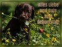 Alles Liebe und Gute zum Geburtstag!    Aus der Kategorie Geburtstagskarten für Hundefans
