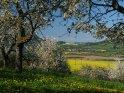 Blick durch Kirschbäume bei Witzenhausen in die weite Ebene