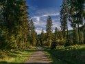 Weg im Harz im Frühling erstrahlt im abendlichen Licht