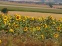 Dieses Motiv ist am 11.01.2017 neu in die Kategorie Sonnenblumen aufgenommen worden.