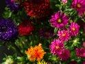 Blumenstrauß aus Astern und Färberdistel