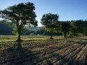 Bäume zwischen abgeernteten Felder im Wesertal