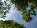 Dieses Motiv ist am 11.08.2017 neu in die Kategorie Bäume aufgenommen worden.
