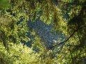 Blick durch Zweige  hindurch auf die Wasseroberfläche des Sösestausees