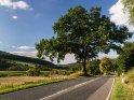 Eiche im Wesertal zum Herbstanfang. Der Hügel links im Bild befindet sich bereits in Hessen.    Dieses Motiv ist am 14.10.2016 neu in die Kategorie Süd-Niedersachsen aufgenommen worden.