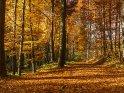 Herbstlicher Waldweg    Dieses Motiv ist am 30.09.2016 neu in die Kategorie Herbstlandschaften aufgenommen worden.