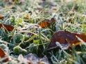 Herbstliche Blätter mit Reif