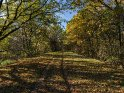 Von Bäumen gesäumter Weg im Spätherbst
