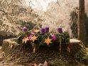 Adventskranz im Park mit drei brennenden Kerzen zum 3. Advent