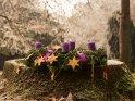 Adventskranz im Park mit vier brennenden Kerzen zum 4. Advent    Dieses Kartenmotiv wurde am 15. Dezember 2016 neu in die Kategorie Adventskränze aufgenommen.