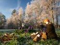 Nikolausstiefel mit einem Adventskranz an dem zwei Kerzen brennen steht vor einer Reihe weiß überzogener Bäume.