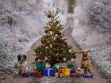 Weihnachtsbaum in weißer Landschaft mit darunter liegenden Geschenken und zwei Hunden, die ihn bewachen.