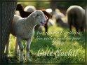 Fürs schnelle Einschlafen hier noch schnell ein paar Schafe.  Gute Nacht!