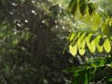 Regenwald bei Regen