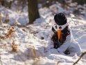 Dieses Motiv gibt es auf CoolPhotos.de seit dem 30. Januar 2017. Sie finden es in der Kategorie Winterliche Kostümfotos.