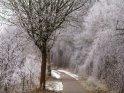Von reifbedeckten Büschen und Bäumen gesäumter Weg im südlichen Niedersachsen