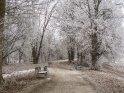 Reifbedeckte Bäume am Göttinger Kiessee