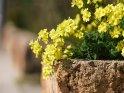 Dieses Motiv ist am 09.05.2017 neu in die Kategorie Frühlingsfotos von Mallorca aufgenommen worden.