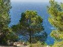 Dieses Kartenmotiv wurde am 26. Juni 2018 neu in die Kategorie Pflanzenfotos von Mallorca aufgenommen.