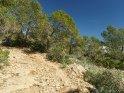 Dieses Kartenmotiv wurde am 16. Mai 2018 neu in die Kategorie Pflanzenfotos von Mallorca aufgenommen.