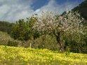 Aus der Kategorie Frühlingsfotos von Mallorca