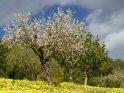 Dieses Motiv finden Sie seit dem 02. März 2018 in der Kategorie Frühlingsfotos von Mallorca.