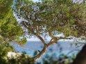 Dieses Motiv ist am 15.05.2018 neu in die Kategorie Pflanzenfotos von Mallorca aufgenommen worden.