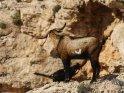 Dieses Kartenmotiv ist seit dem 26. Februar 2018 in der Kategorie Tiere auf Mallorca.