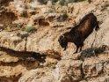 Dieses Motiv ist am 26.05.2018 neu in die Kategorie Tiere auf Mallorca aufgenommen worden.