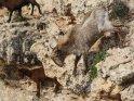 Dieses Motiv ist am 20.04.2018 neu in die Kategorie Tiere auf Mallorca aufgenommen worden.