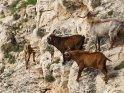 Dieses Motiv ist am 24.04.2017 neu in die Kategorie Tiere auf Mallorca aufgenommen worden.