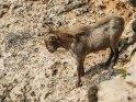 Dieses Motiv ist am 20.01.2019 neu in die Kategorie Tiere auf Mallorca aufgenommen worden.
