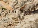 Dieses Motiv ist am 13.01.2018 neu in die Kategorie Tiere auf Mallorca aufgenommen worden.