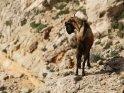 Dieses Motiv ist am 24.06.2018 neu in die Kategorie Tiere auf Mallorca aufgenommen worden.