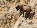 Dieses Motiv wurde am 24. Januar 2018 in die Kategorie Tiere auf Mallorca eingefügt.