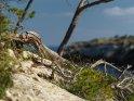 Dieses Kartenmotiv wurde am 26. September 2017 neu in die Kategorie Sonstige Fotos von Mallorca aufgenommen.