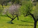 Dieses Motiv finden Sie seit dem 26. Februar 2018 in der Kategorie Frühlingsfotos von Mallorca.